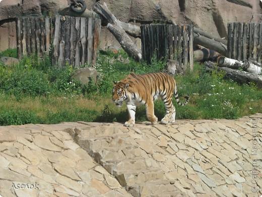 Зоопарк в Ижевске и еще немного...