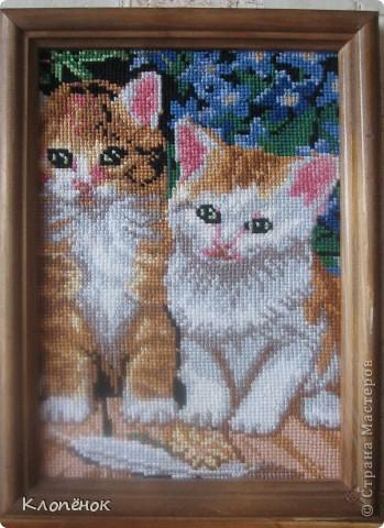 Это мои котятки)) Я их вышивала года 4 назад на день рождения маме. Без вспышки фото 1