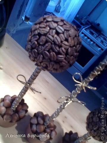 Для дома. Кофейные деревья фото 3
