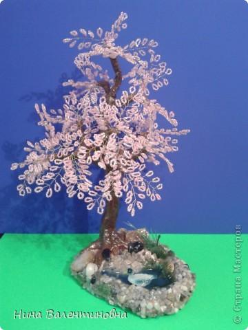 Сакура у воды. фото 2