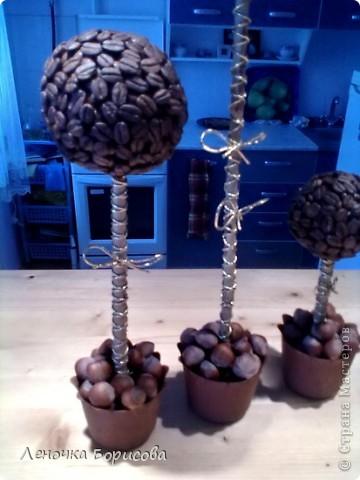 Для дома. Кофейные деревья фото 2