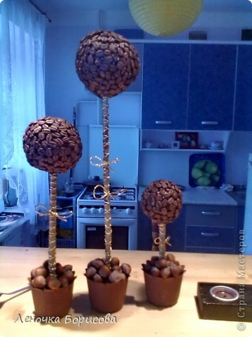 Для дома. Кофейные деревья фото 1