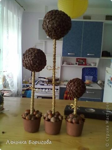 Для дома. Кофейные деревья фото 4