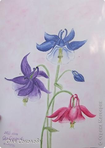 Даже не знаю, что написать в комментарии. Нарисовала акварелью эти прекрасные ранне-летние цветы.