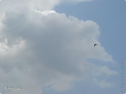 Небо, облака и ласточки фото 29