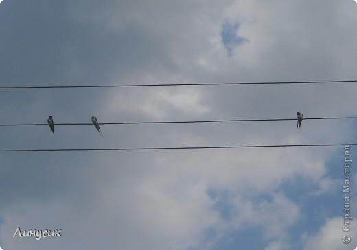 Небо, облака и ласточки фото 8