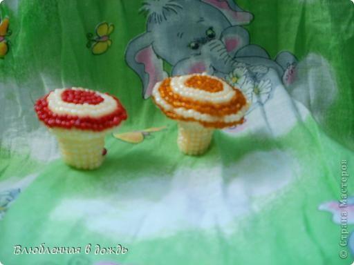 А это съедобные грибочки. Волнушка и рыжик: фото 1