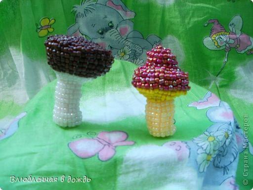 А это съедобные грибочки. Волнушка и рыжик: фото 3