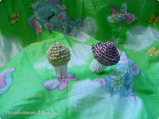 А это съедобные грибочки. Волнушка и рыжик: фото 5