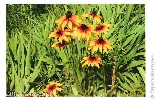 Дорогие мастерицы ! Лето в разгаре , у всех расцветают цветы.Я тоже решила высадить на нашу общую клумбу свои два кустика. Эти цветы , по-моему, называются рудбекия. фото 4