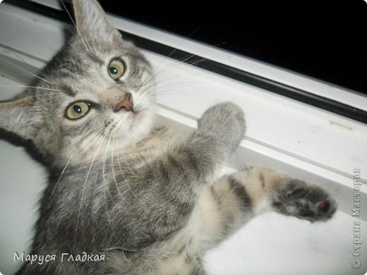Это замечательное существо - мой кот Семён. Здесь ему 7-8 месяцев. Совсем ребёнок!  фото 3