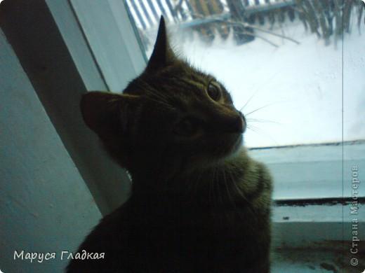 Это замечательное существо - мой кот Семён. Здесь ему 7-8 месяцев. Совсем ребёнок!  фото 2
