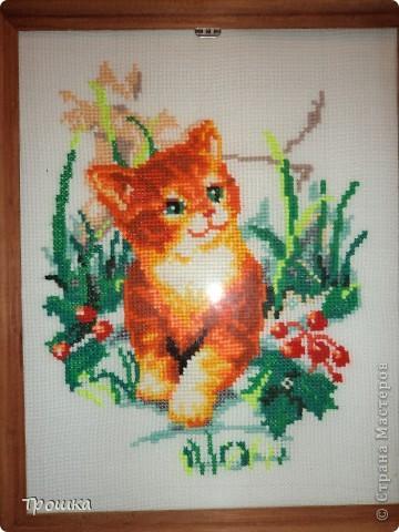 Кошка Леона.
