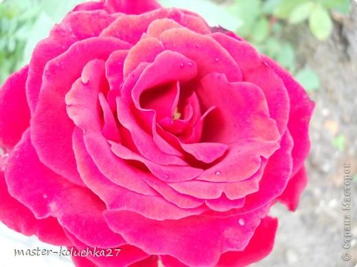 правда красиво?это на даче...сегодня я хочу показать какие цветы и ягоды растут на даче. фото 2