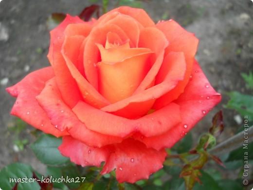 правда красиво?это на даче...сегодня я хочу показать какие цветы и ягоды растут на даче. фото 3