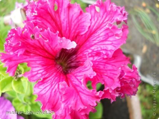 правда красиво?это на даче...сегодня я хочу показать какие цветы и ягоды растут на даче. фото 4
