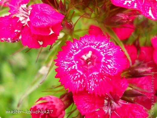 правда красиво?это на даче...сегодня я хочу показать какие цветы и ягоды растут на даче. фото 6