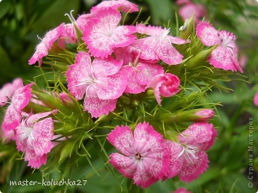 правда красиво?это на даче...сегодня я хочу показать какие цветы и ягоды растут на даче. фото 7