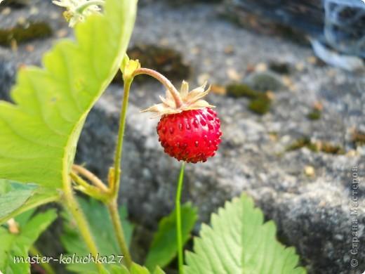 правда красиво?это на даче...сегодня я хочу показать какие цветы и ягоды растут на даче. фото 10