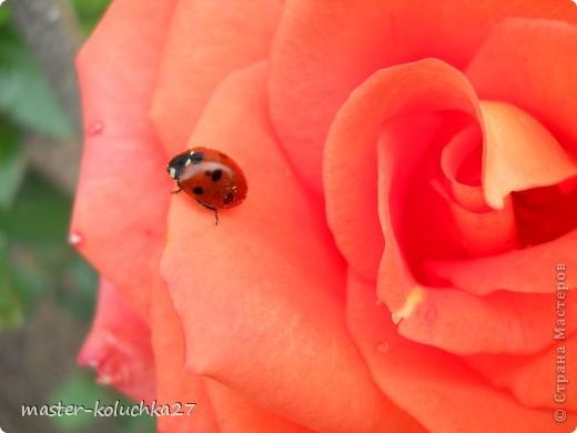правда красиво?это на даче...сегодня я хочу показать какие цветы и ягоды растут на даче. фото 1