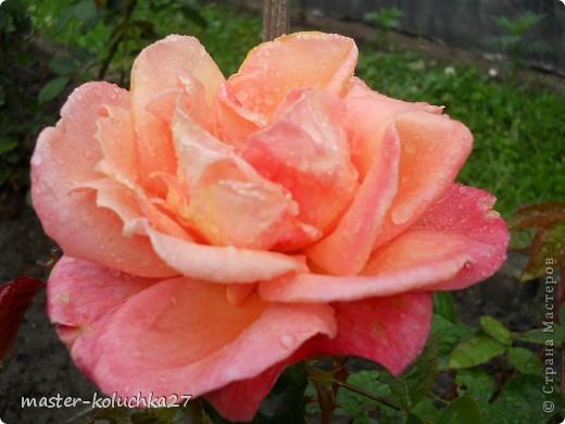 правда красиво?это на даче...сегодня я хочу показать какие цветы и ягоды растут на даче. фото 16