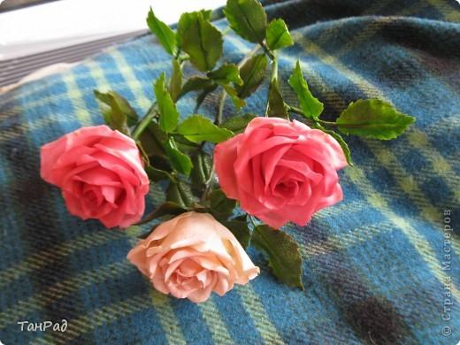 Розы, розы - королевы цветов. Хочу, чтобы эти цветы и у меня были красивы.  фото 1