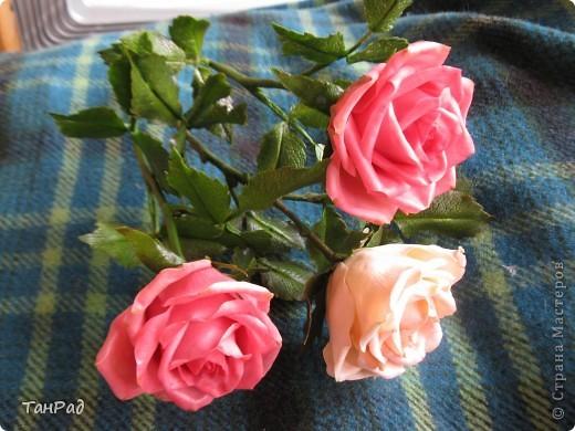 Розы, розы - королевы цветов. Хочу, чтобы эти цветы и у меня были красивы.  фото 2