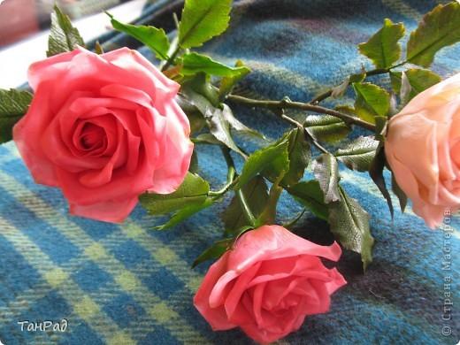 Розы, розы - королевы цветов. Хочу, чтобы эти цветы и у меня были красивы.  фото 4