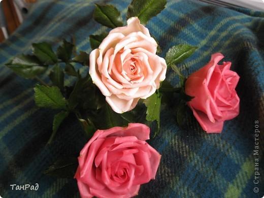 Розы, розы - королевы цветов. Хочу, чтобы эти цветы и у меня были красивы.  фото 5