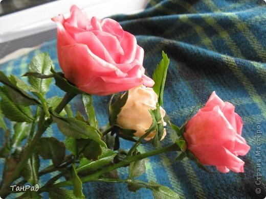 Розы, розы - королевы цветов. Хочу, чтобы эти цветы и у меня были красивы.  фото 6