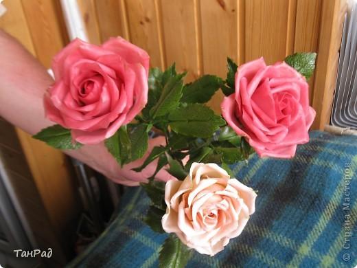 Розы, розы - королевы цветов. Хочу, чтобы эти цветы и у меня были красивы.  фото 7