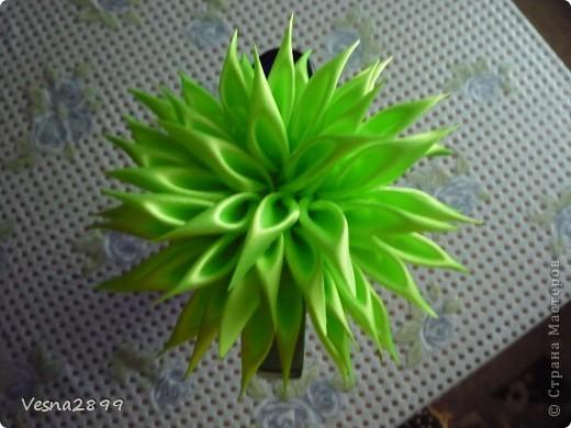 Канзаши-2 фото 1