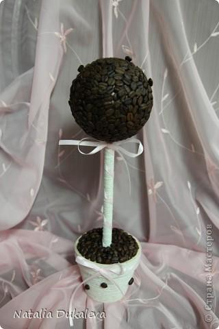 Это мое самое первое деревце, такое скромное...., надеюсь его примут в свою семью любители-кофеманы:) Делала его специально в подарок для подруги нашей семьи. Теперь оно стоит у нее в офисе.  фото 2