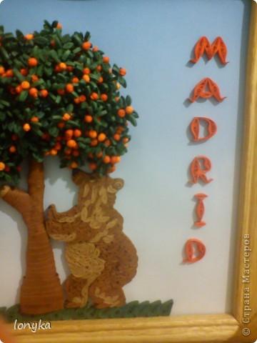медведь и мандоровое дерево фото 1