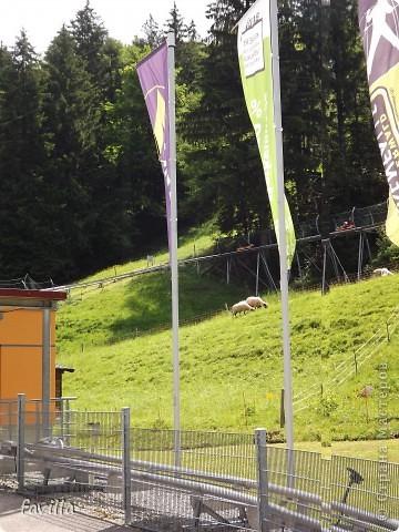 Alpsee Coaster самый длинный в Германии родельбан (горка для катания на санях) Длина 3 км, подъем в гору (на высоту около 1400 м) на подвесной дороге. При спуске - 68 поворотов, 23 волны, 7 прыжков, 4 моста, и 430-градусный спиральный поворот. Скорость развивается до 40 км в час Подъем в гору происходит на подвесной дороге.  Я фотографировала  маму и Вику со своего сиденья.  фото 22