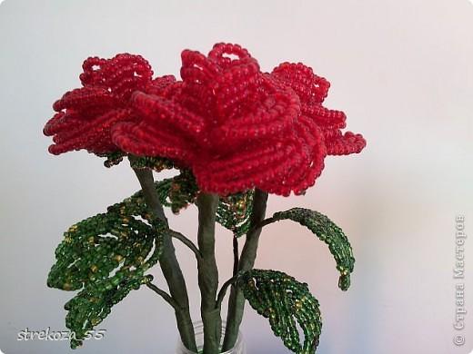 rozy фото 1