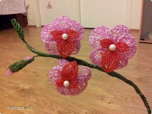 orhideja фото 1