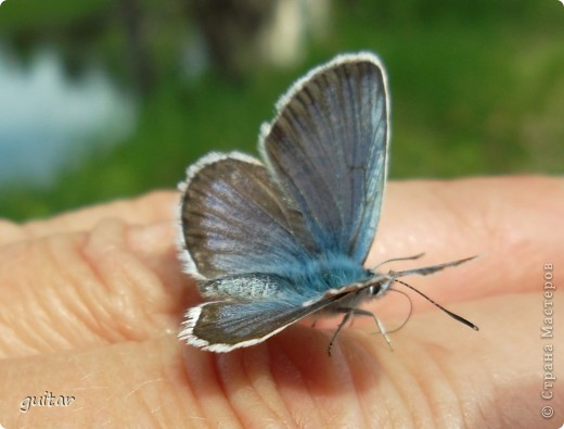 Не знаю, что нашло на бабочку, но ей, наверное, так понравилось фотографироваться, что она решила попозировать мне на моей же руке. фото 2