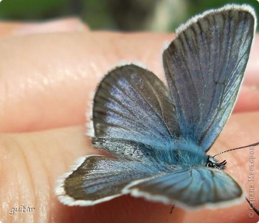 Не знаю, что нашло на бабочку, но ей, наверное, так понравилось фотографироваться, что она решила попозировать мне на моей же руке. фото 1