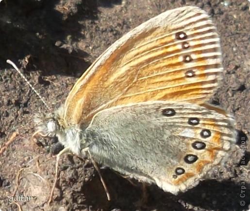 Не знаю, что нашло на бабочку, но ей, наверное, так понравилось фотографироваться, что она решила попозировать мне на моей же руке. фото 5