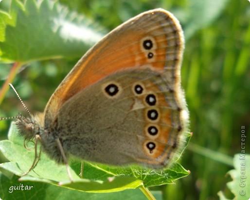 Не знаю, что нашло на бабочку, но ей, наверное, так понравилось фотографироваться, что она решила попозировать мне на моей же руке. фото 4