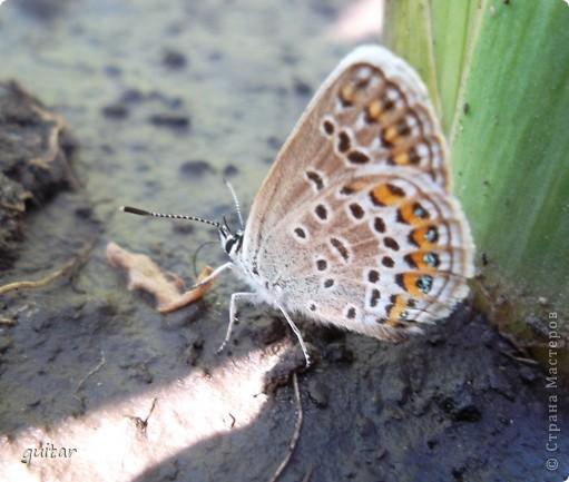 Не знаю, что нашло на бабочку, но ей, наверное, так понравилось фотографироваться, что она решила попозировать мне на моей же руке. фото 8