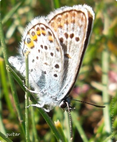 Не знаю, что нашло на бабочку, но ей, наверное, так понравилось фотографироваться, что она решила попозировать мне на моей же руке. фото 3
