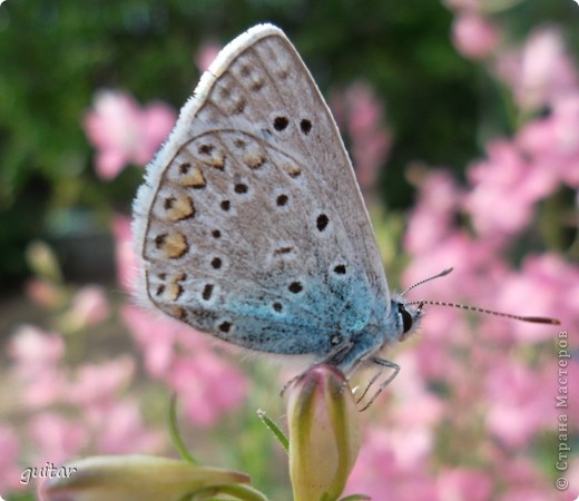 Не знаю, что нашло на бабочку, но ей, наверное, так понравилось фотографироваться, что она решила попозировать мне на моей же руке. фото 6