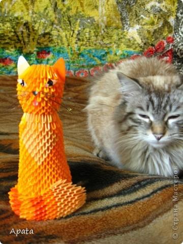 Ещё одна кошка фото 1