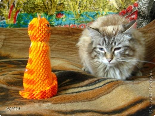 Ещё одна кошка фото 4