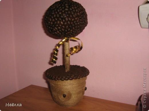Мое кофейное дерево.кудаж я без него.У вас всех насмотрелась фото 1