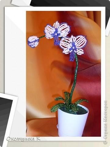 """Приветствую всех жителей и гостей замечательной Страны Мастеров! И представляю на ваш суд свои  попытки смастерить орхидеи. Так как от природы я ленивая, поэтому изобретала """"велосипед"""" сама. Бисер взяла какой был в наличии, и теперь у меня голубые орхидеи. Строение цветка тоже не совсем соответствует их истинному строению. Отсюда и название моих цветов.  Да, и еще цвести они только начинают,  у меня молоденькие экземпляры) Совместное фото . Фотоаппарат у меня новый ( для себя любимой купила) и в нем есть такая функция, что можно рамочки подбирать. Этот вид рамочек показался мне наиболее подходящим... фото 2"""