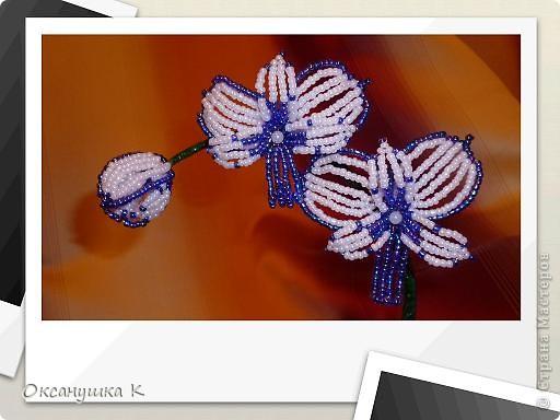 """Приветствую всех жителей и гостей замечательной Страны Мастеров! И представляю на ваш суд свои  попытки смастерить орхидеи. Так как от природы я ленивая, поэтому изобретала """"велосипед"""" сама. Бисер взяла какой был в наличии, и теперь у меня голубые орхидеи. Строение цветка тоже не совсем соответствует их истинному строению. Отсюда и название моих цветов.  Да, и еще цвести они только начинают,  у меня молоденькие экземпляры) Совместное фото . Фотоаппарат у меня новый ( для себя любимой купила) и в нем есть такая функция, что можно рамочки подбирать. Этот вид рамочек показался мне наиболее подходящим... фото 3"""