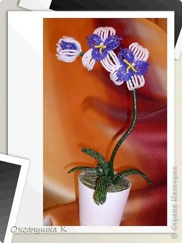 """Приветствую всех жителей и гостей замечательной Страны Мастеров! И представляю на ваш суд свои  попытки смастерить орхидеи. Так как от природы я ленивая, поэтому изобретала """"велосипед"""" сама. Бисер взяла какой был в наличии, и теперь у меня голубые орхидеи. Строение цветка тоже не совсем соответствует их истинному строению. Отсюда и название моих цветов.  Да, и еще цвести они только начинают,  у меня молоденькие экземпляры) Совместное фото . Фотоаппарат у меня новый ( для себя любимой купила) и в нем есть такая функция, что можно рамочки подбирать. Этот вид рамочек показался мне наиболее подходящим... фото 4"""